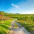 Bezoek de Hessische Bergstrasse in de vroege lente!