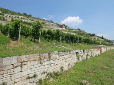 Het wijngebied Saale-Unstrut