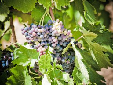 Kan men zich terugvinden in de wijnwetgeving wat betreft de herkomstbenaming?